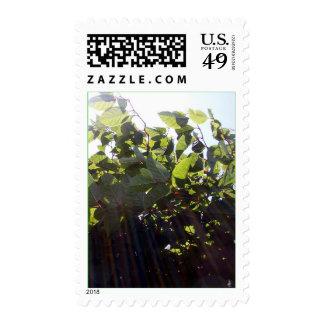 Sun Rays Stamp