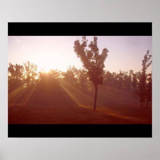 Sun Rays through Tree Poster