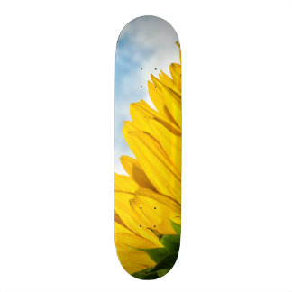 sun rests skateboard deck