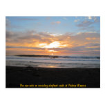 Sun Sets on Snoozing Elephant Seals Postcard