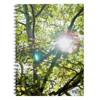Sun shining through Sycamore tree Notebook