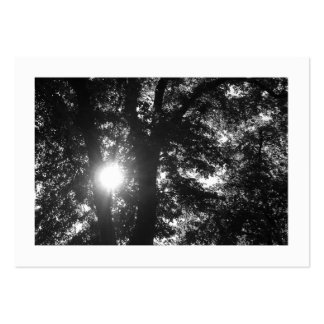 Sun Shining Through Trees B&W Large Business Cards (Pack Of 100)