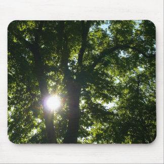 Sun Shining Through Trees Mousepad