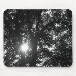 Sun Shining Through Trees Mouse Pads