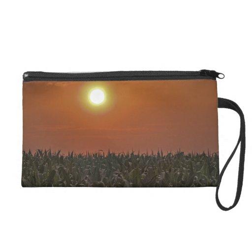 Sun sobre un campo de maíz