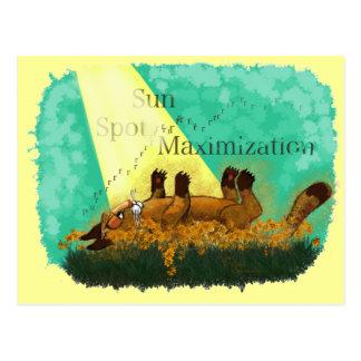 Sun Spot Maximization Postcard
