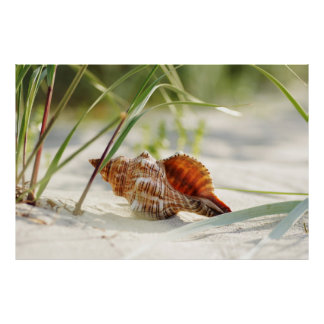 Sun, summer, beach and sea dreamy shell posters