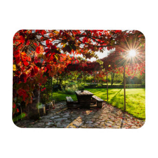 Sun through autumn leaves, Croatia Magnet