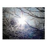 Sun through the branches postcard