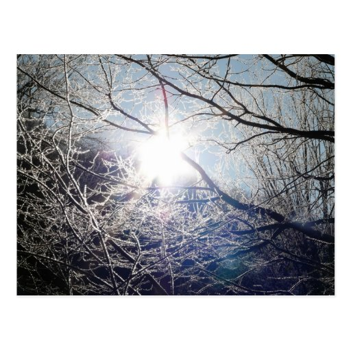 Sun through the branches post cards
