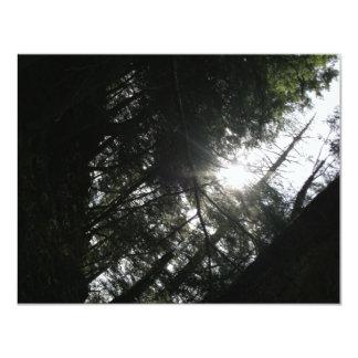 Sun Through Trees Card