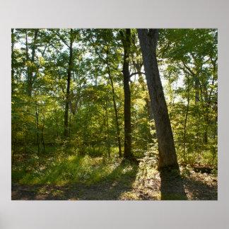 Sun Through Trees - Gettysburg National Park Poster