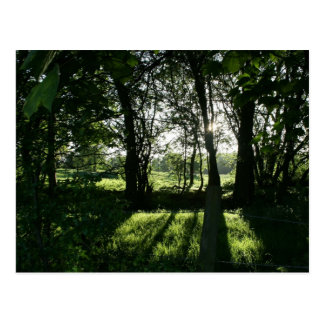 Sun through Trees Llangollen Canal Postcard