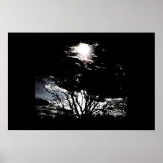 Sun thru Trees B&W Poster