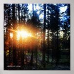Sun Trees Poster