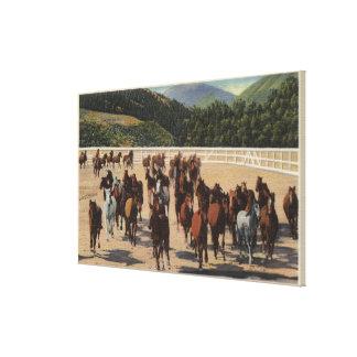 Sun Valley, ID - Wild Horse Roundup Canvas Print