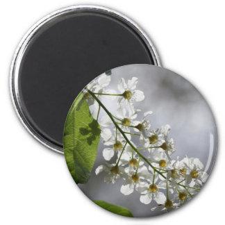 Sun white flower blossums 2 inch round magnet