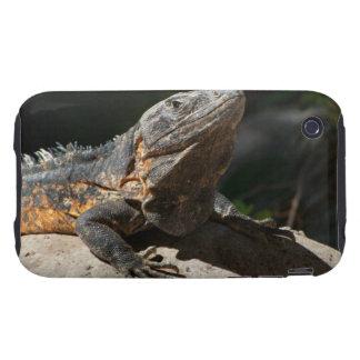 Sun-Worshipping Iguana iPhone 3 Tough Cover