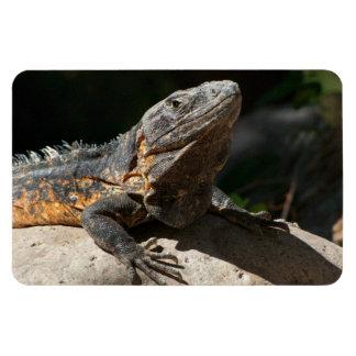 Sun-Worshipping Iguana Magnet