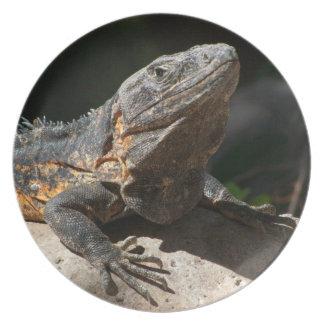 Sun-Worshipping Iguana Melamine Plate