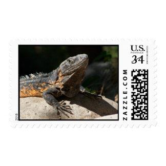 Sun-Worshipping Iguana Postage