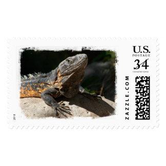 Sun-Worshipping Iguana Postage Stamps
