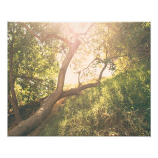 Sun y árboles cojinete