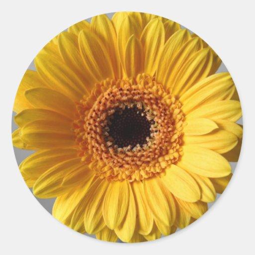 Sun Yellow Gerbera Round Stickers