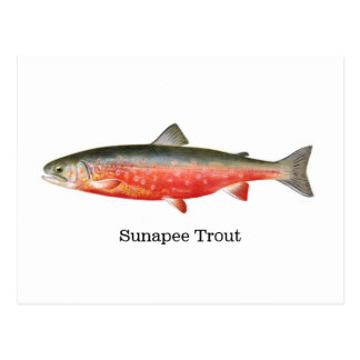 Sunapee Trout Fish Postcard