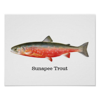 Sunapee Trout Fish Poster