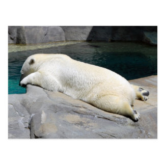 Sunbather Too Post Card
