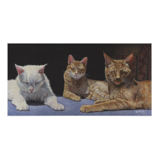 Sunbathers Tabby and White Cats art poster