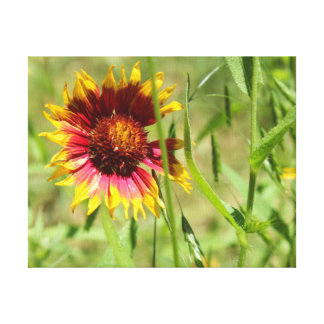 Sunbathing Indian Blanket Canvas Print
