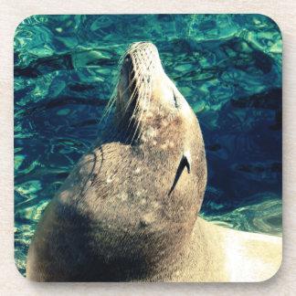 Sunbathing Sea Lion Beverage Coaster