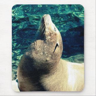 Sunbathing Sea Lion Mouse Pad