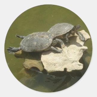 Sunbathing turtles classic round sticker
