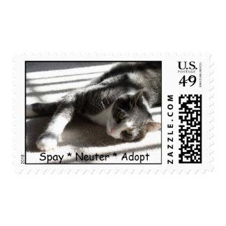 Sunbeam Gabe Spay * Neuter * Adopt Postage Stamp