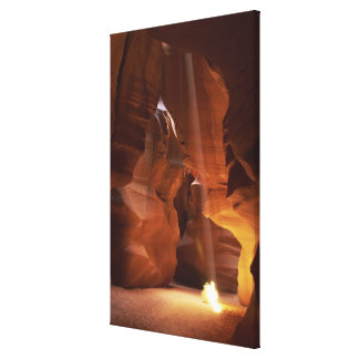 Sunbeam hitting tumbleweed on canyon floor canvas print