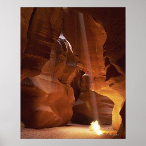 Sunbeam hitting tumbleweed on canyon floor print