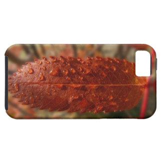 Sunbeam on Mountain Ash iPhone SE/5/5s Case