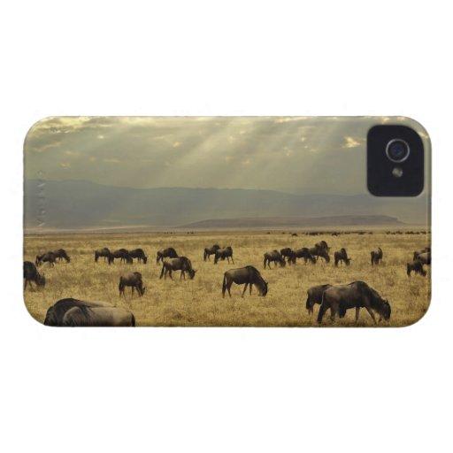 Sunbeams and Wildebeest, Connochaetes taurinus Blackberry Bold Case