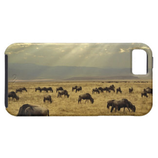 Sunbeams and Wildebeest, Connochaetes taurinus iPhone SE/5/5s Case