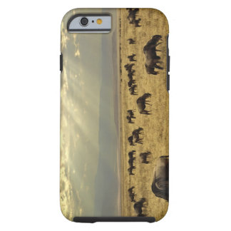 Sunbeams and Wildebeest, Connochaetes taurinus Tough iPhone 6 Case