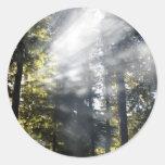 Sunbeams Classic Round Sticker