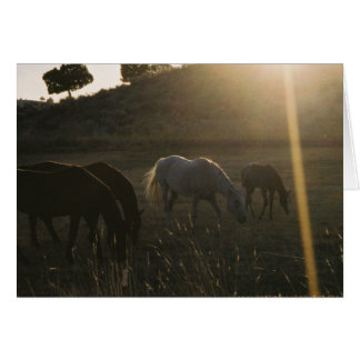 Sunbeams from Heaven - Photo Greeting Card