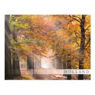 Sunbeams in an autumn forest, Holland bar postcard