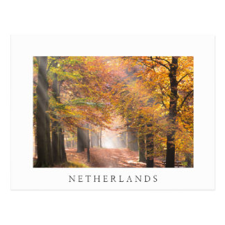 Sunbeams in an autumn forest white postcard