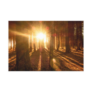 Sunbeams in Forest Canvas Print