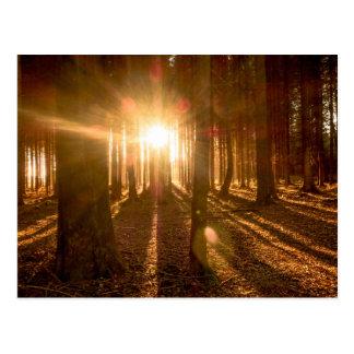 Sunbeams in Forest Postcard