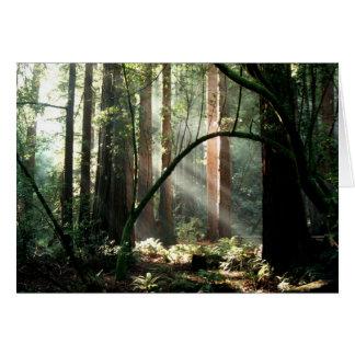 Sunbeams in the woods card